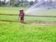 Quản lý tổng hợp dịch hại lúa ở vùng đồng bằng sông Cửu Long hiệu quả và bền vững