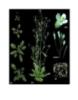 Bài tập sinh trưởng và phát triển ở thực vật