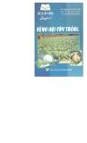 Bác sĩ cây trồng: Bệnh hại cây trồng