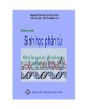 Giáo trình Sinh học phân tử - Nguyễn Hoàng Lộc