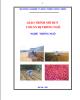 Giáo trình Chuẩn bị trồng ngô: Phần 2 - Trần Văn Dư (chủ biên)