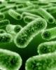 Giáo trình Vi sinh vật học môi trường: Phần 1 - Lê Xuân Phương