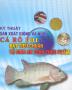Bộ sưu tập Nuôi trồng thủy sản