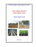 Giáo trình gieo trồng ngô