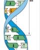 Đại cương cơ sở hóa học của sinh học phân tử