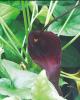 Ôn tập Thực vật dược