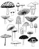 Bài giảng Sinh học và kỹ thuật trồng nấm - Chương 3: Các phương pháp nghiên cứu nấm