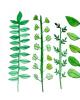 Bài giảng Bảo vệ thực vật - Bài: Một số loài sâu hại ở loài thông keo và các biện pháp phòng trừ