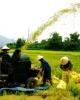Kết quả tổng điều tra nông thôn và nông nghiệp và thủy sản năm 2011