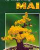 Ebook Kỹ thuật trồng mai: Phần 1 - Việt Chương
