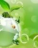 Giáo trình Ô nhiễm môi trường - Biện Văn Tranh