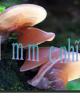 Bài giảng Sinh học và kỹ thuật trồng nấm - Bài: Nấm mộc nhĩ