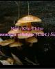 Bài giảng Sinh học và kỹ thuật trồng nấm - Bài: Nấm kim châm