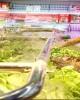 Giáo trình Dinh dưỡng và vệ sinh an toàn thực phẩm - Phần 1