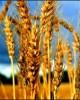 Giáo trình Cây lương thực: Phần 1